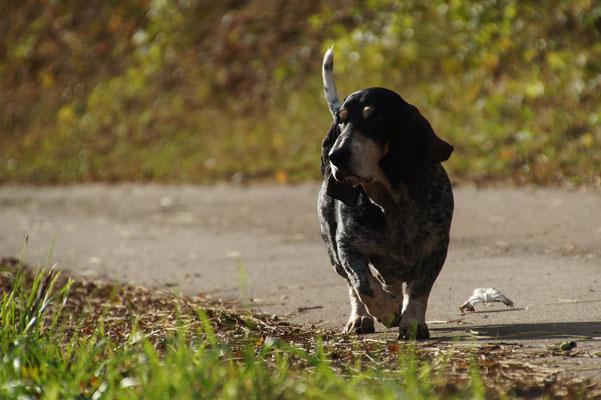Hunde Nanny Merzig