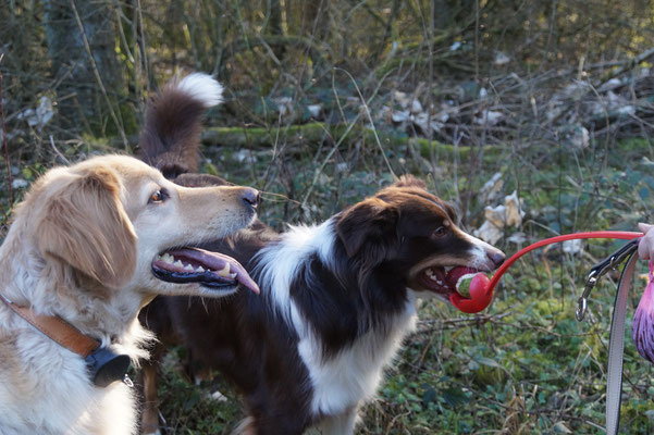 Hundesitter