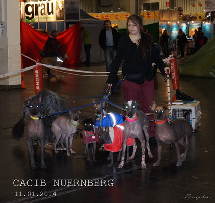 CACIB Nürnberg 11.01.2014