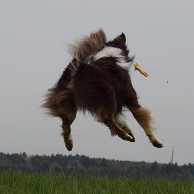 Hundebetreuung Merzig