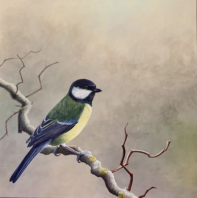 KOHLMEISE, Acryl auf Leinwand, acrylic on canvas, 80/80cm, CHF 1'500.--,Original reserviert, Prints erhältlich, prints available
