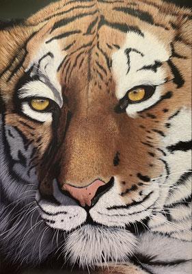 TIGER FACE, Acryl auf Leinwand, acrylic on canvas, 100/70 cm, CHF 4'900.--,  Prints erhältlich, prints available