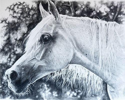 Araber weiss, Bleistift auf Papier, graphite on paper, 42/29,7cm, CHF 790.--