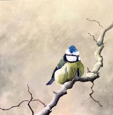 BLAUMEISE, Acryl auf Leinwand, acrylic on canvas, 80/80cm, CHF 1'500.--,Original reserviert, Prints erhältlich, prints available