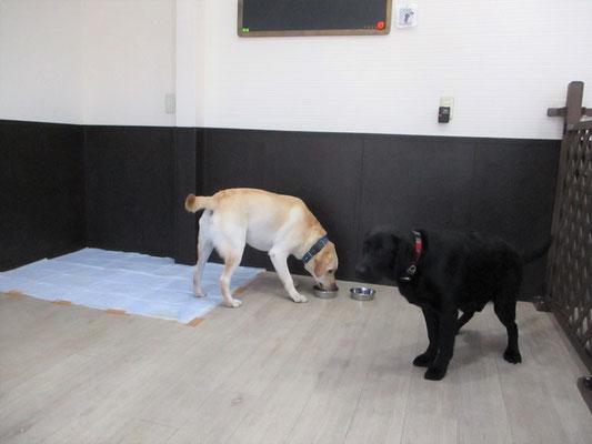 犬の保育園Baby・犬・犬のしつけ・犬の社会化・習志野市・八千代市・船橋市
