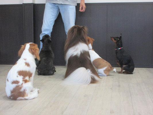 犬の保育園Baby・犬・犬のしつけ・犬の社会化・ペットホテル・習志野・八千代・船橋