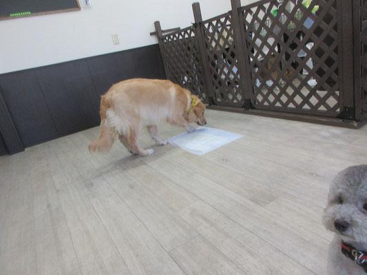 犬の保育園Baby・犬・犬のしつけ・犬の社会化・習志野・八千代・船橋
