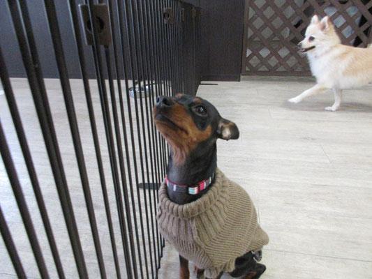 犬の保育園Baby・犬・犬のしつけ・犬の社会化・犬の保育園