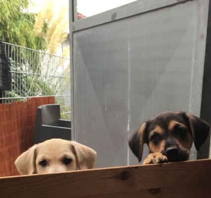 Dürfen wir wieder 'rein?