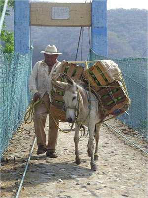 Foto: Mariano Hernandez Gil - the Donkey Sanctuary Mexico