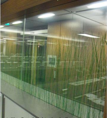 Büro Abtrennung - dekoratives Glas Design, Seaweed in Glas einlaminiert.