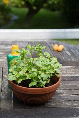 auch Pflanzen vermehren wir