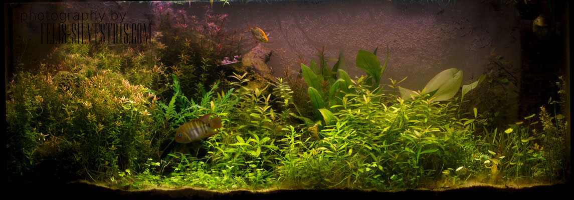 240L Pflanzenbecken