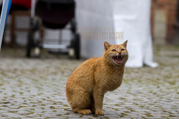 Tritatz - Miau