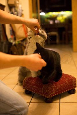 Katzen lernen Tricks