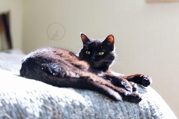 Persermix schwarze Katze