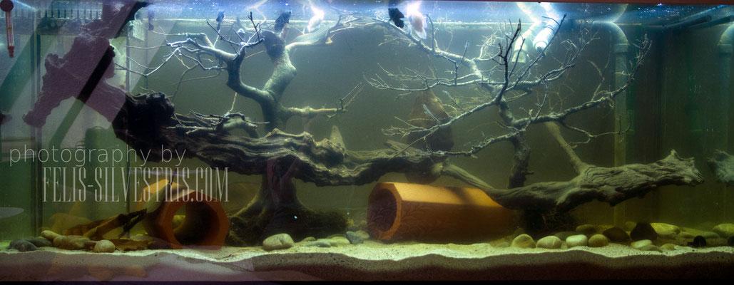 Barsch Aquarium