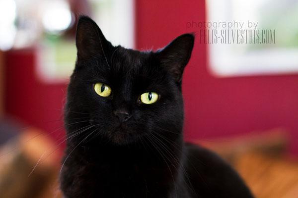 Black Persermix