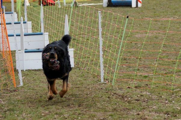 Chiva beim Sport