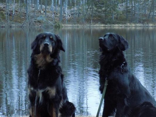 Chiva mit Halbschwester im  Schwedenurlaub