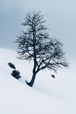 Gummenalp | Dallenwil | Schweiz