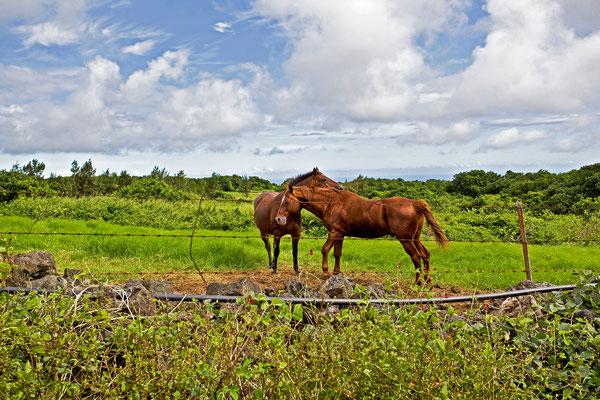 Hawaii | Kona | Tierisch