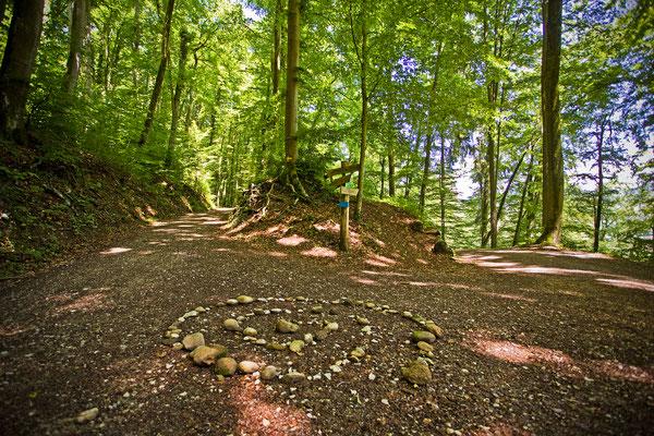 Lauffohrer Wald | Aargau | Schweiz