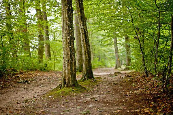 Riniker Wald | Aargau | Schweiz