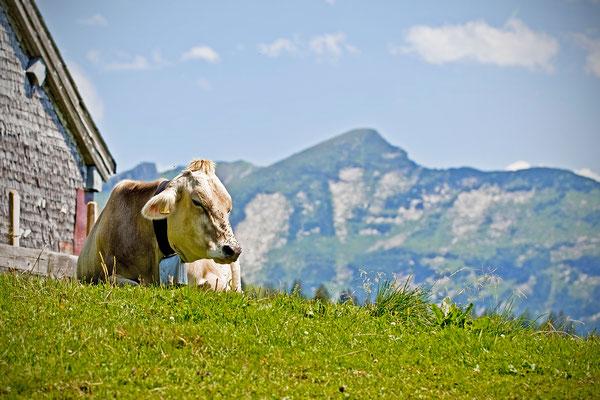 Amden | Schweiz