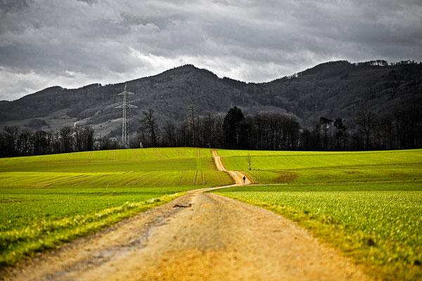 Habsburger Wald | Aargau | Schweiz
