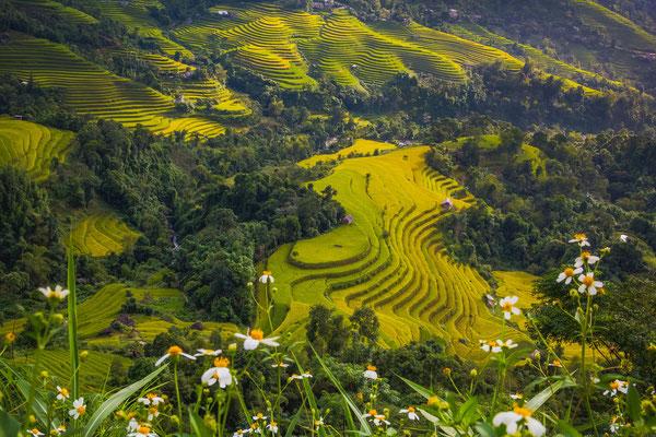 Erlebe Deinen exklusiven Urlaub in Vietnam   Die Reiserei, Dein Reisebüro in Berlin & Brandenburg