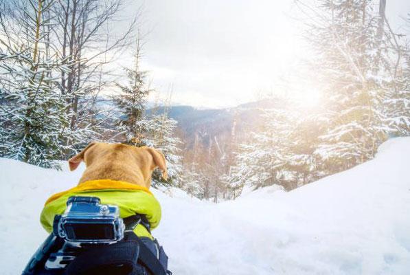 Urlaub mit Hund in Österreich, Winterurlaub, Skifahren Snowboarden
