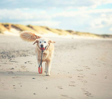 Urlaub mit Hund in Skandinavien, Baden Ostee Nordsee