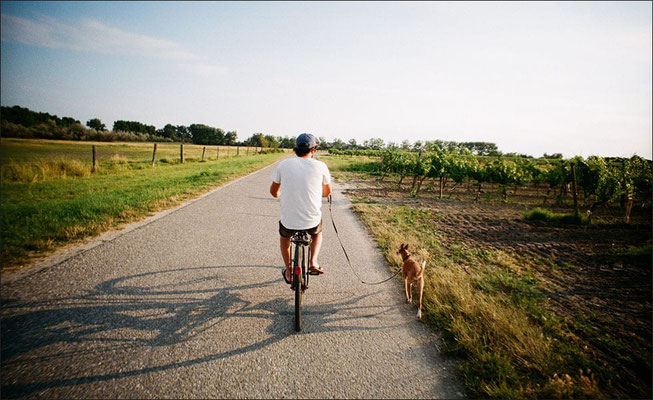 Urlaub mit Hund in Österreich, Radtour Donau