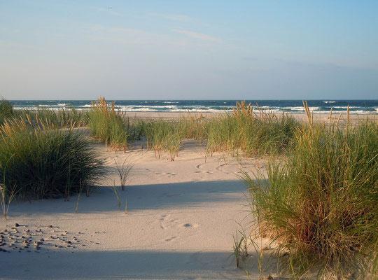 Urlaub mit Hund in Deutschland, Ostsee Nordsee
