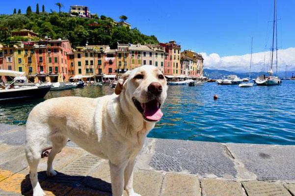 Deine Kreuzfahrt mit Deinem Hund!