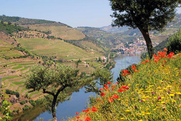 Flusskreuzfahrt auf dem Douro, Dourokreuzfahrt in Deiner Reiserei, Reisebüro in Berlin Brandenburg