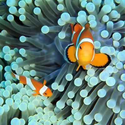 2015 im Korallenriff