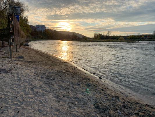 Sandbank bei Leibstadt unterhalb des Stauwehrs Albbruck-Dogern. (Foto PC)