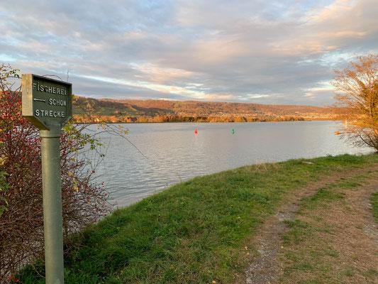 Der gestaute Rhein oberhalb des Stauwehrs bei Leibstadt. Hier (nach der Schonstrecken-Tafel) beginnt Revier 7. (Foto PC)