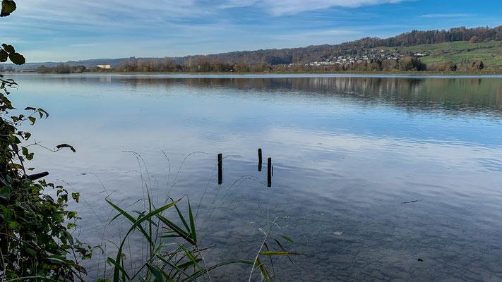 Ausgeprägte Flachwasserzonen am langsamfliessenden Rhein bei Full. (Foto PC)
