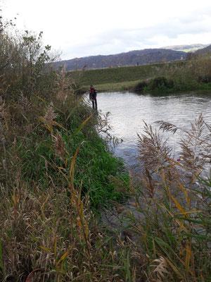 Kontrollabfischen 05.11.2020 Umgehungsgewässer Leibstadt durch Fa. Aquarius. (Foto FK)