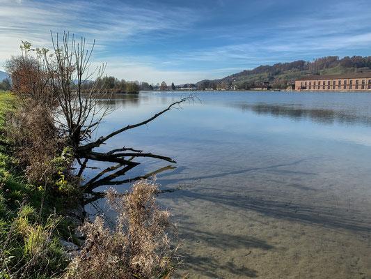Der Rhein bei Full - auch auf diesem Bild ist gut zu erkennen, dass das Ufer bei Full oft sehr seicht ist. (Foto PC)