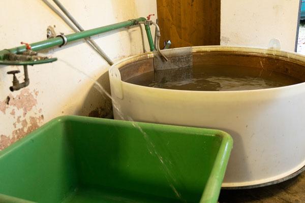 Frisches, eisigkaltes Wasser vom Bach. Im Hintergrund eines der Rundbecken, wo die Forellen nach Geschlecht getrennt bis zum Abstreifen gehältert werden. (Foto CC)
