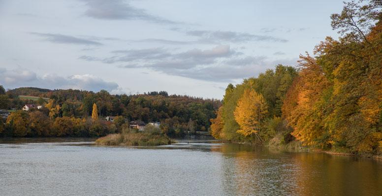 Der Rhein bei Etzgen. Die kleine Insel und Kiesbänke prägen das Bild. (Foto CC)