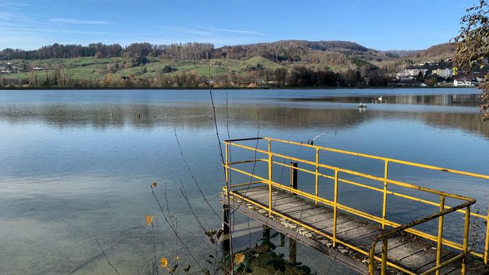 Der Rhein bei Full mit seinen flachen Uferzonen beherbergt zahlreiche Wasservögel. (Foto PC)