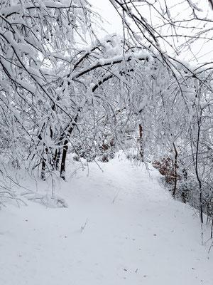 Verschneiter Uferweg. Rheinsulz, 16.01.2021. (Foto HL)