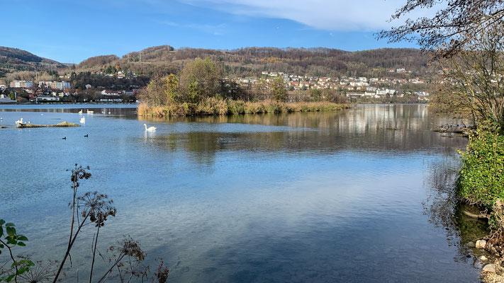 Flache Uferzonen, langsam fliessendes Wasser, kleine Inseln. Den Wasservögeln scheint es zu gefallen am Rhein bei Full. (Foto PC)