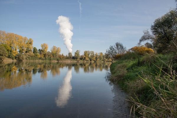 Der Altrhein bei Schwaderloch. Im Hintergrund ist das Kernkraftwerk Leibstadt zu sehen. (Foto CC)