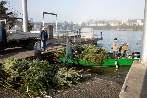 Laichbäume versenken Februar 2021. (Foto CC)